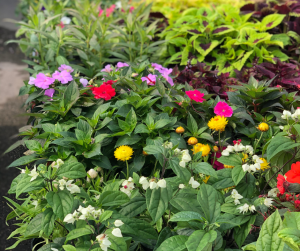 assortment of flowers at D&D Feed
