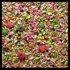 Brooks Acapulco Fancy Hookbill No Sun Blend Bird Seed