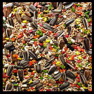 Brooks Grains Plus Cockatiel Blend Bird Seed