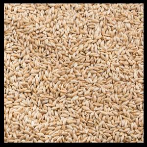 Brooks Raw Grains Canary Seed