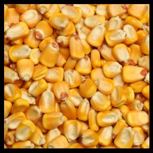 Brooks Raw Grains Whole Corn