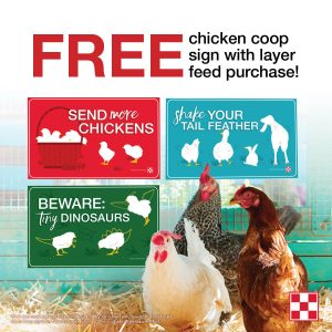 Free Flock Sign with Purchase